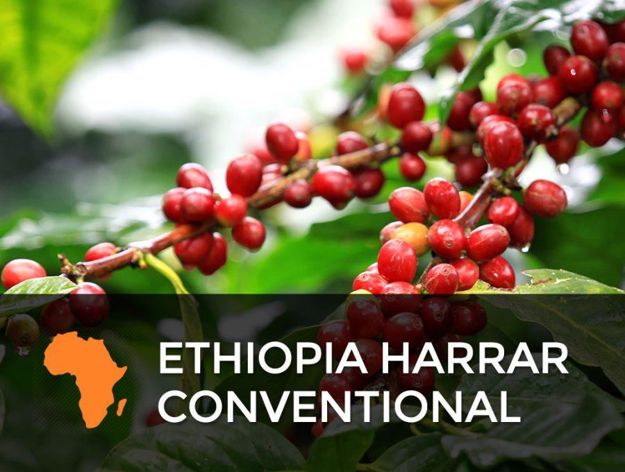 Ethiopia Harrar Conventional 900x680  Ethiopia Harrar - Conventional