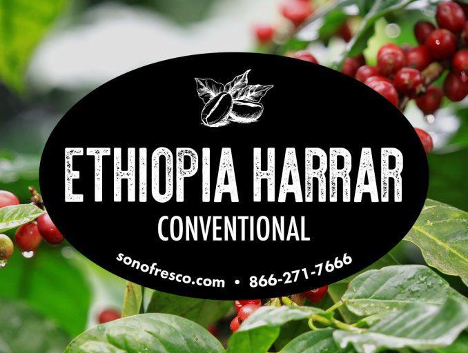 Ethiopia Harrar Conventional Green Beans 678x512  Ethiopia Harrar - Conventional