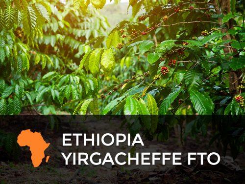 Ethiopia Yirgacheffe FTO 500x377  Nicaragua FTO