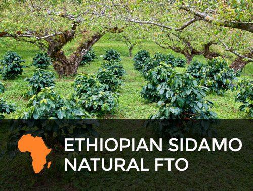 Ethiopian Sidamo Natural - FTO