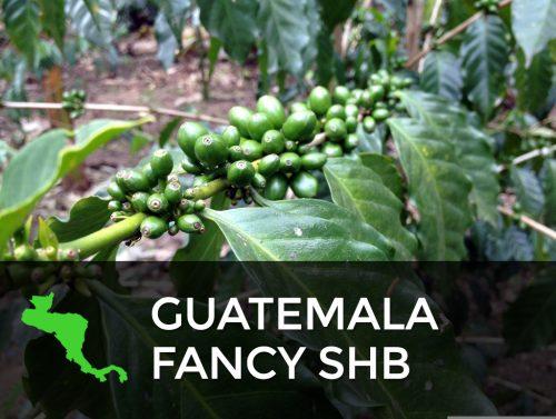Guatemala Fancy SHB