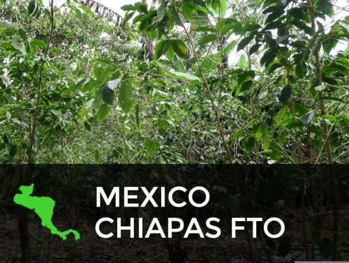 MEXICO CHIAPAS FTO 500x377  Profile Coffee Roaster
