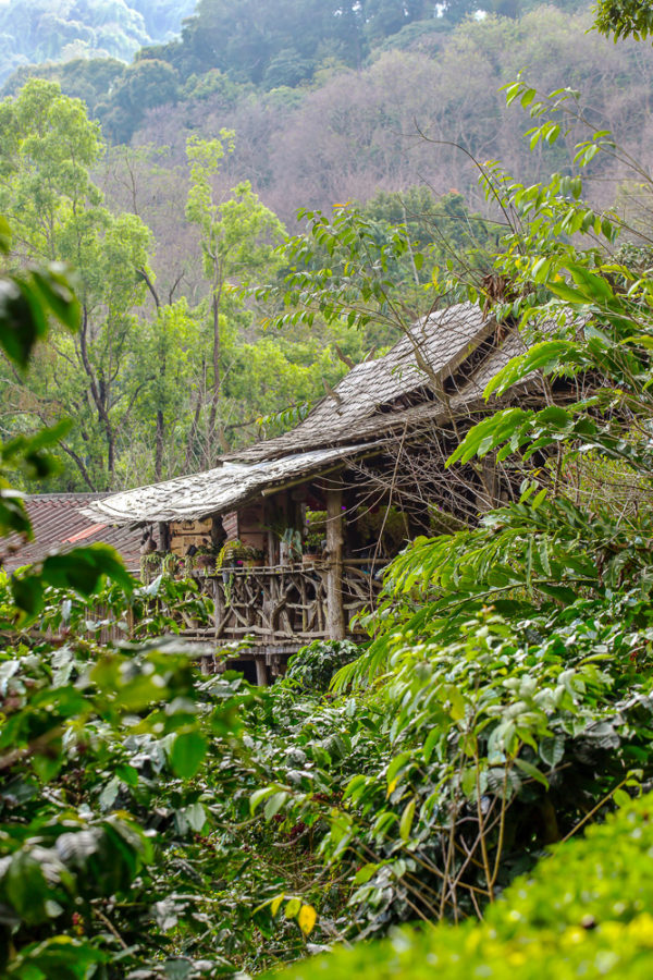 House on the coffee plantation