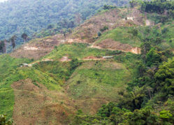 Hills outside of Minca, Colombia dotted with small coffee plants