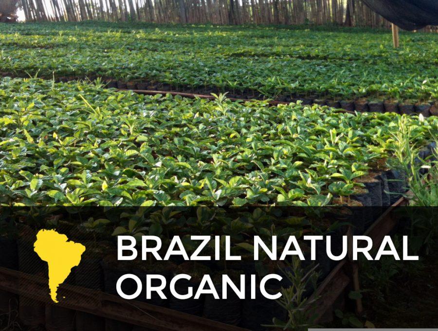 BRAZIL NATURAL ORGANIC 900x680  Brazil Natural Organic Cafe Femenino