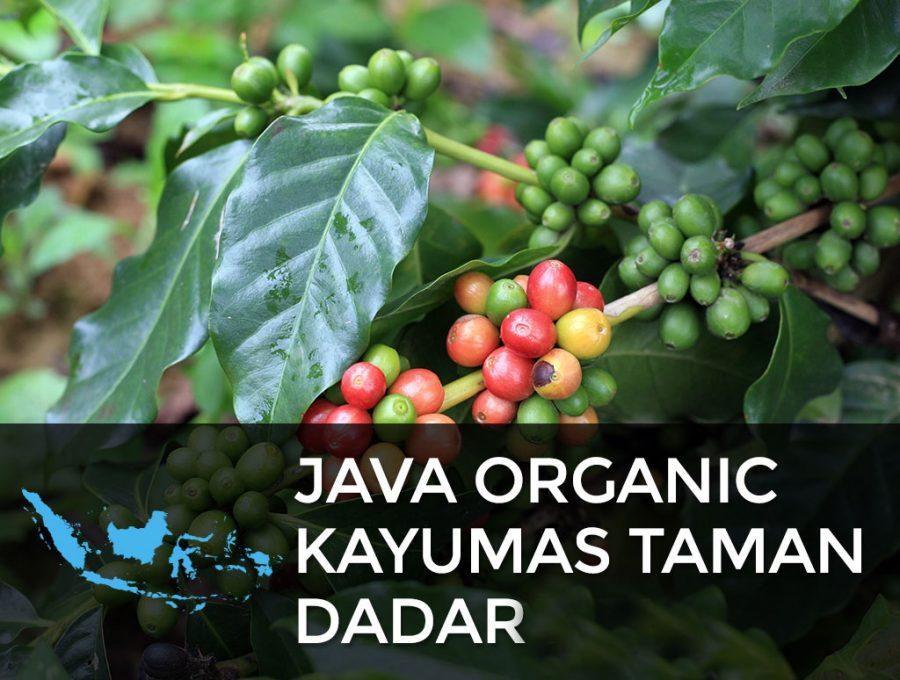 JAVA ORGANIC KAYUMAS TAMAN DADAR 900x680  Java Organic Kayumas Taman Dadar