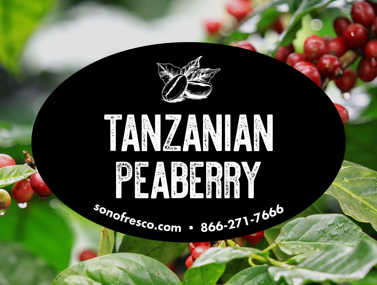 Tanzanian Peaberry Conventional Coffee Beans For Sale Sonofresco