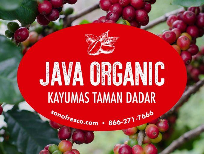 Java Organic Coffee Beans 678x512  Java Organic Kayumas Taman Dadar
