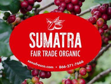 Sumatra FTO Beans 375x283  20LB Build a Box