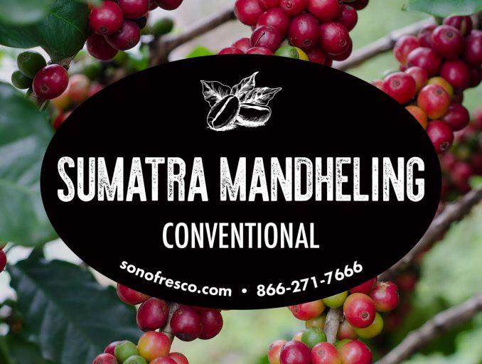 Sumatra Mandheling Beans 678x512  Sumatra Mandheling - Conventional