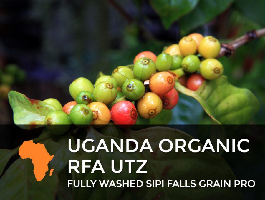 Uganda Organic RFA UTZ 900x680  Uganda Organic UTZ – Fully washed Sipi Falls Grain Pro