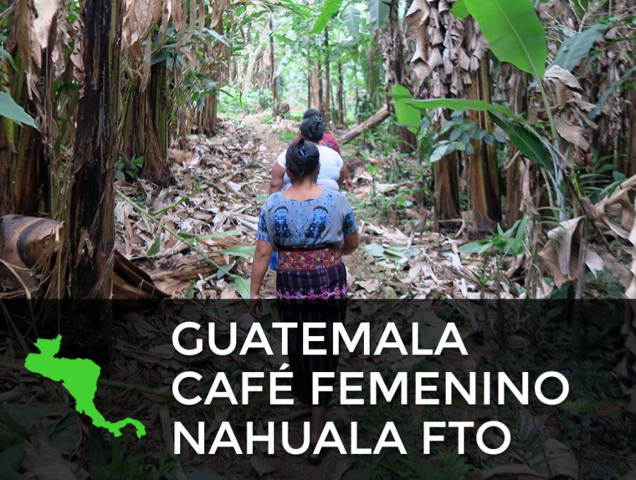 Guatemala Café Femenino Nahuala FTO 900x680  Guatemala Café Femenino FTO