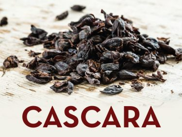 CASCARA – Coffee Plant
